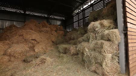 навес : Hangar with hay, hay in stock, shed with hay panorama