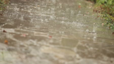 drip bulb : Rain drops fall on the track, the focus movement Stock Footage