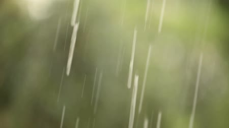 drip bulb : Rain drops on a background of trees, green trees are blurred