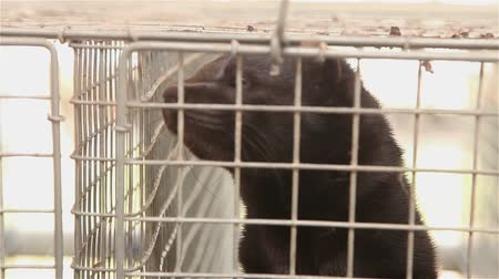 gaiola : The mink in the cage, close-up, Otter on the farm