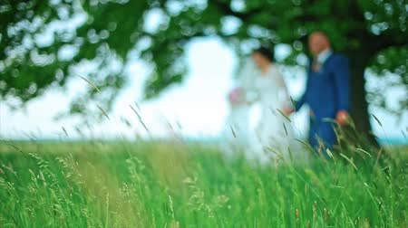 pacto : Blurred Wedding Couple Walk in the Forest green grass Stock Footage