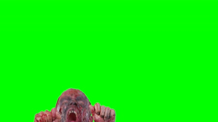 zombi : Halloween theme horrible scary zombie in clothes breaks out of the bottom of the screen and want to catch you isolated over green screen background Stok Video
