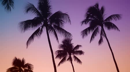 промывали : Retro Style Hawaii Palm Trees Gently Moving At Sunset