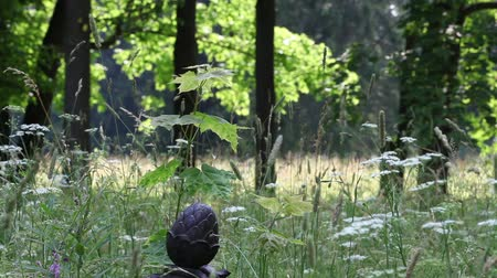 reen : artifact in the forest Stock Footage