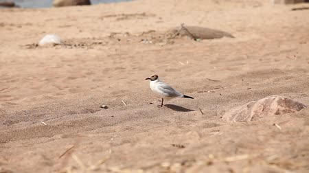 dene : one bird is a seagull on a wild sandy beach
