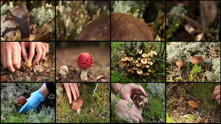 cogumelos : mushrooms and berries montage