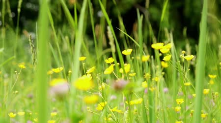 запачканный : wildflowers Blurred Motion. dolly shot. Close to