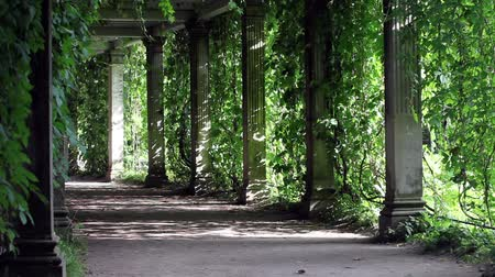 uliczka : shady walkway with columns Pleasant coolness shady alley zoom out
