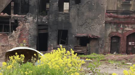 fantasma : yellow flowers in a ghost town Stock Footage