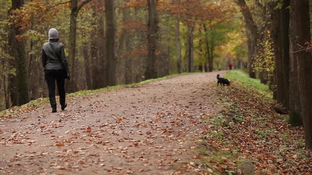 unrecognizable woman and dog walk in park in autumn Stock mozgókép