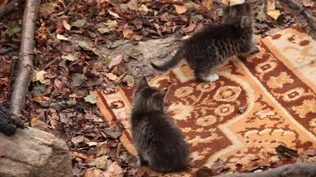 kokarda : Two small striped kitten playing with a bow Wideo