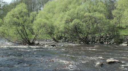 рыболовство : Fast stream Spring landscape, Fresh green trees
