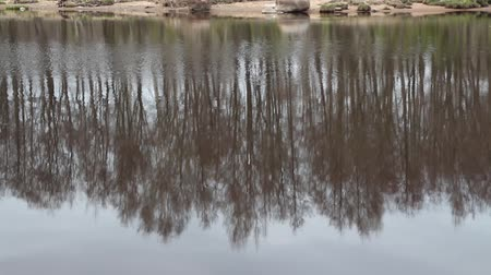 melankoli : Inverted spring forest reflected in a river, abstract  background loop