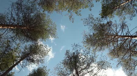 szédülés : trees rotate over head High in the blue sky