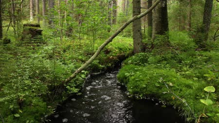 текущий : Black water in a creek, wildlife beautiful forest landscape.