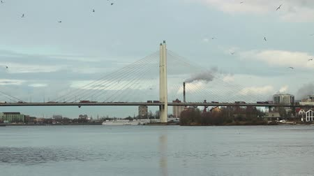 mooring : Birds circling in the sky above cable-stayed bridge