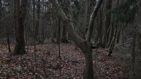 pień : Gloomy autumn forest, bare trees, earth is strewn with fallen leaves. Wideo