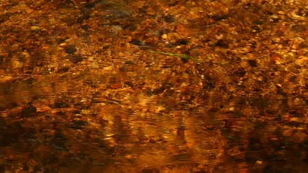 febre : Creek golden color, sunlight abstract background