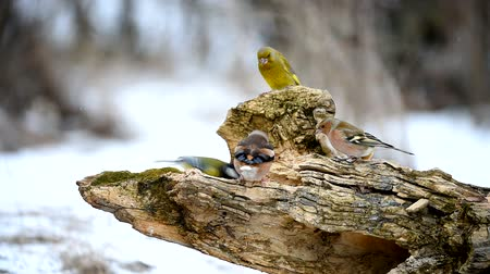 besleyici : Wintering birds sitting on a feeder and eating seeds