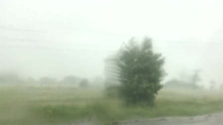atmosféra : Strong winds and rain shook the tree