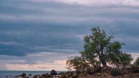 Lonely tree standing in front of thunderstorms and cloudy, windy flowing around in sunset time Dostupné videozáznamy