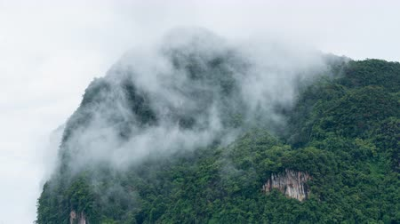 damp : Mist flow through top of mountain with green tree in cold temperatures Stockvideo