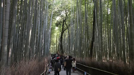 KYOTO, JAPAN - DECEMBER 1: Tourists walking on the trails of Bamboo Forest on December 1, 2012 in Arashiyama area, Kyoto, Japan.