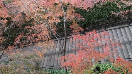 acer : Stone stairs in autumn at Kiyomizu temple, Kyoto, Japan. Stock Footage