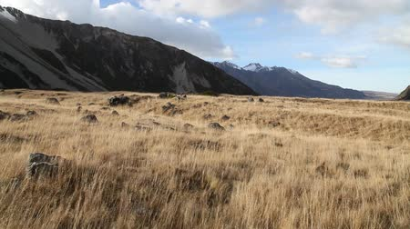 hooker : Grassland in Hooker Valley of Aoraki Mount Cook National Park in New Zealand.