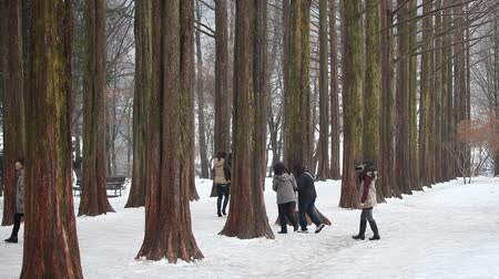 CHUNCHEON, KOREA -DEC 16: Tourists walking at The Metasequoia footpath on Dec 16, 2012 in Namiseom, Chuncheon, South Korea. This Metasequoia path attracted 2.3 million visitors in 2012. Stock Footage