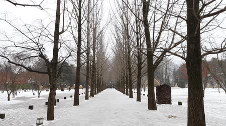 The Metasequoia footpath on Namiseom island in winter. Stock Footage