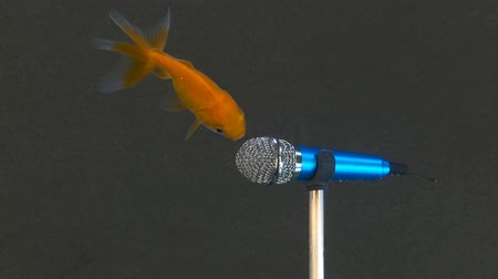 mikrofon : Smart fish express their opinion to a microphone underwater. Conceptual high definition footage, more options in my portfolio Wideo