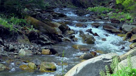 margem do rio : Small mountain river. Landscape with stream flowing between rocks and trees. Water in mountains. River in forest in spring. National park. Green foliage Stock Footage