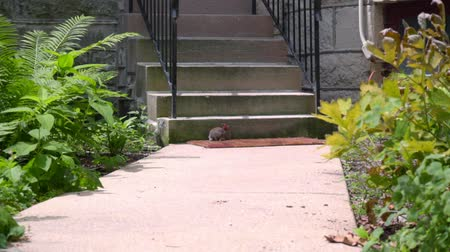 buço : Farm rabbit at summer day. Little rabbit near the stairs. Domestic rabbit sitting near home stairs