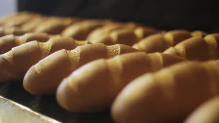 piekarz : Bakery products. Bread production process at food factory. Baked bread on production line. Loaves of bread on production line. Bread manufacturing line. Food processing plant. Food industry