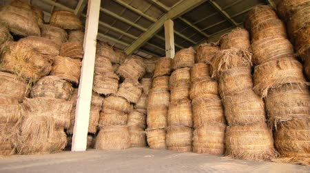 empilhamento : Agriculture warehouse. Hay stack in storage. Haystacks in factory hangar. Wooden storage building with hay bale inside. Agriculture harvest. Storage warehouse