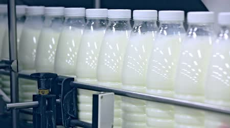 корова : Dairy factory conveyor line. Milk bottles on conveyor belt at dairy plant. Milk production line. Dairy production. Manufacturing line at dairy plant. Milk factory. Food industry Стоковые видеозаписи