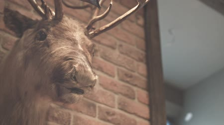 alce : Hunter trophy. Stuffed animal. Deer head on wall. Close up of stuffed deer brick wall. Stuffed deer head. Whitetail deer buck. Loft style. Antlers. Scarecrow. Elk head