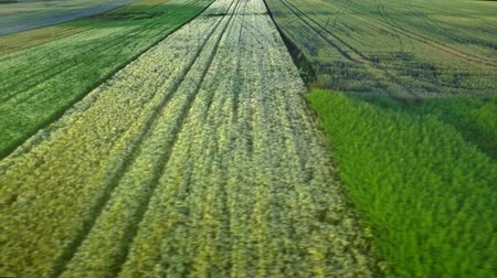 nyomai : Harvest field aerial landscape. Wheel trace agriculture field. Wheat field landscape. Drone view grain growing on rural field. Colorful farming land landscape