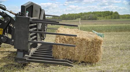 hidrolik : Farming forklift loading bale hay. Agricultural machinery for loading straw on farming field Stok Video