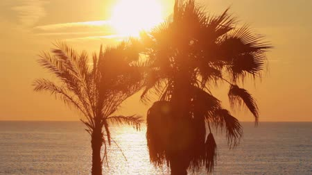 ouvido : Palm tree on background evening sunset at sea. Palm tree on ocean shore during evening sunset. Landscape leaves palm tree heard in wind