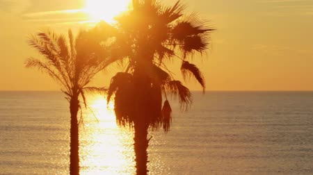 ouvido : Panoramic view palm trees at golden sunset in ocean. Palm tree on tropical beach. Beautiful view palms on sea background during evening sunset