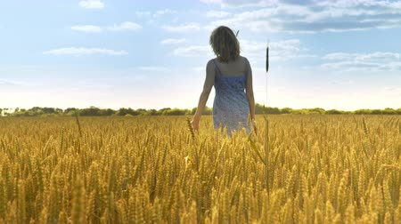 spikes : Woman in wheat field. Woman nature concept. Back view of woman walking away in agriculture land at sun weather. Golden harvest
