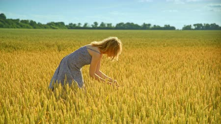 agronomist : Woman analyzing wheat stalk. Woman agronomist in wheat field. Female farmer working at agriculture land. Beautiful girl in dress looking summer harvest ears. Enjoy nature