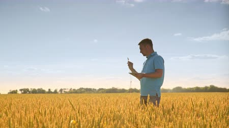 agro : Agronomist working in field. Man with tablet analyzing wheat stalk. Summer harvest land. Agriculture technology. Agriculture scientist looking wheat ears