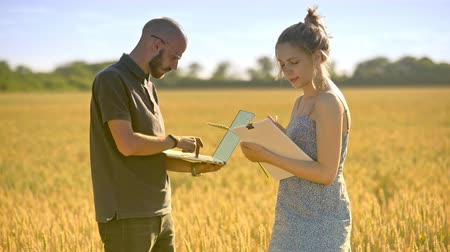 agro : Agronomists working in wheat field at summer. Agriculture scientist using computer to analyze quality of wheat harvest. Agriculture researchers working with laptop in field. Agro business workers Stock Footage