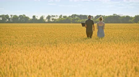 go away : Farmers walking in wheat field. Agricultural workers going away in beautiful yellow field. Back view of agro researchers walk in field at summer Stock Footage