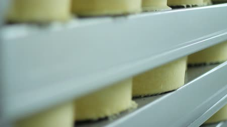 гауда : Cheese wheels stored on warehouse shelves of factory. Food manufacturing line. Cheese factory manufacturing process. Close up of cheese block on storage shelves. Food production. Dairy industry