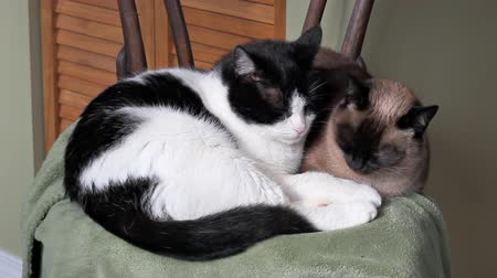 kotki : Two cats sleeping together in a chair
