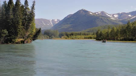 ryba : Red Sockeye salmon jumping in the Kenai river, Alaska with a fishing boat in the distance in summer.
